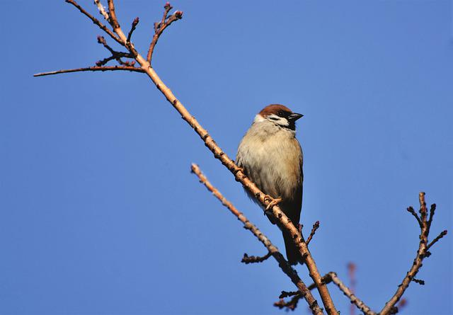 Sparrow, Sperling, Bird, Birdie, Animal, Bush, Branch