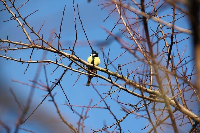 Tit, Bird, Blue, Sky, Branch, Autumn, Winter, Spring