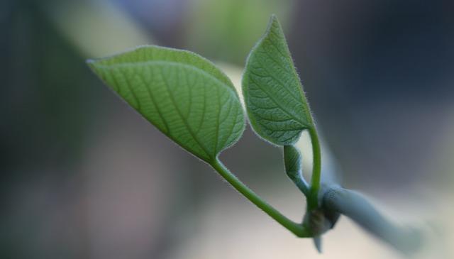 Leaf, Branch, Green, Twig, Twigs, Branches