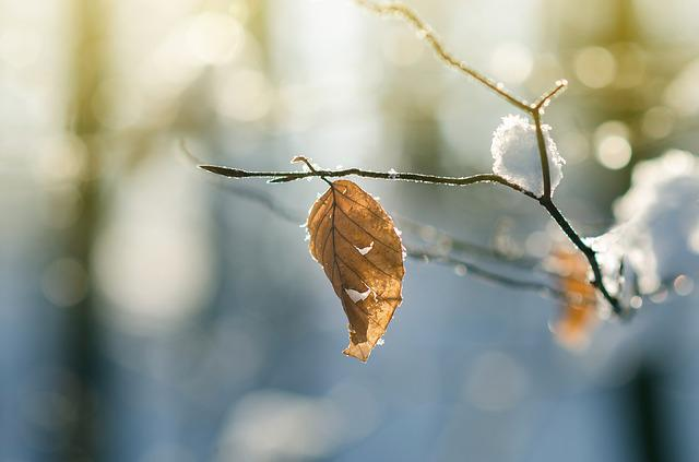 Winter, Forest, Frost, Leafe, Leave, Dry, Branch, Tree