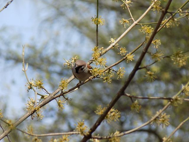 Sparrow, Birdie, Branch, Spring, Nature