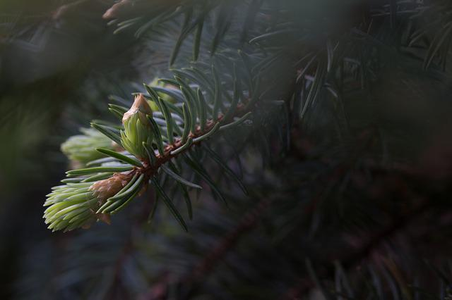 Forest, Dawn, Bud, Fog, Nature, Pine, Critter, Branch