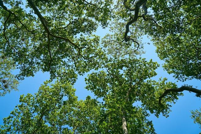 Tree, Blue, Nature, Sky, Forest, Landscape, Branch