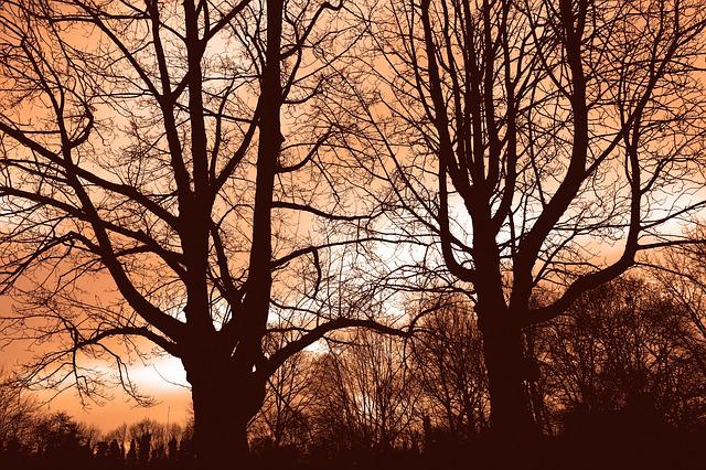Tree, Branch, Bare Tree, Bare Branch, Silhouette