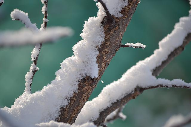Winter, Snow, Tree, A Branch, Cold, Branch, Nature