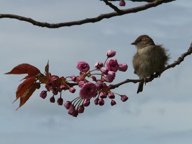Bird, Branch, Sit, Sparrow, Sperling, Junvogel