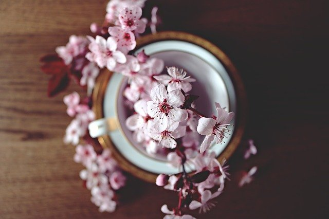 Spring, Cherry, Bloom, Blossom, Nature, Tree, Branch