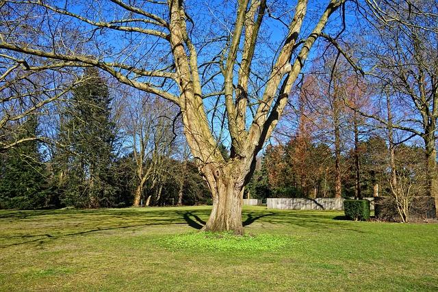 Tree, Trunk, Branch, Bare Tree, Winter Tree, Grass