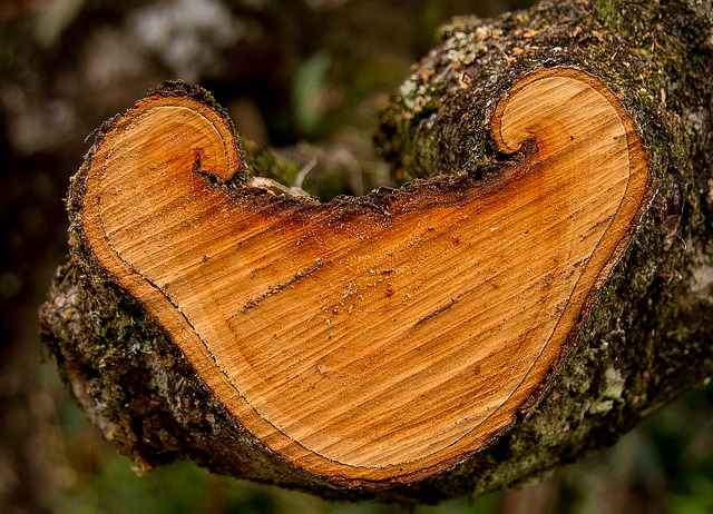 Wood, Branch, Tree, Sawn, Timber, Texture, Shape, Rings
