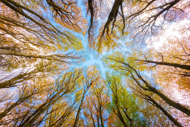 Trees, Tree Canopy, Forest, Branches, Beech, Foliage