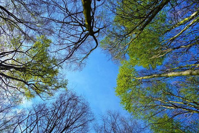 Tree, Tree Top, Up, Sky, Trunk, Branches, Foliage