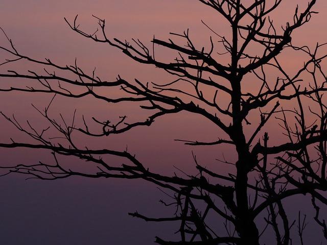 The Evening Sun, Branches, Silhouette, Butyl 墾