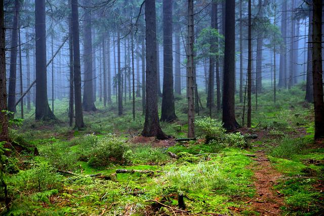 Forest, Tree, Moss, The Fog, Branches, Nature