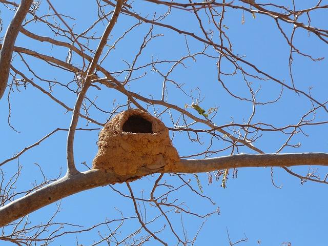 Bird's Nest, Nature, Animals, Brazil, Bird