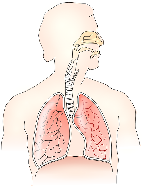 Anatomy, Lungs, Breathing, Human
