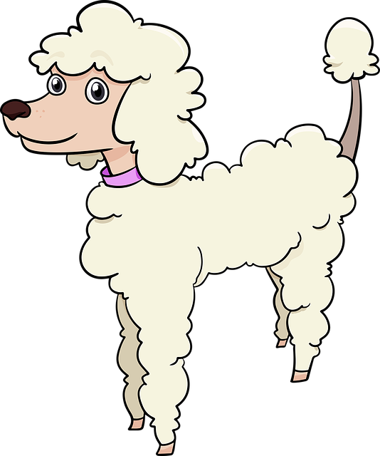 Poodle, Dog, Breed, Cute, Adorable