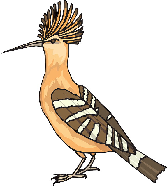 Angry, Bird, Hoopoe, Wings, Feathers, Breed