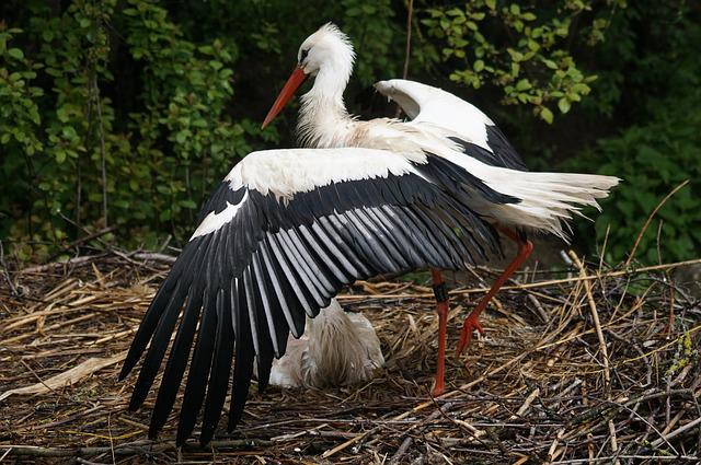 Stork, White Stork, Rain, Breed, Feather, Storchennest