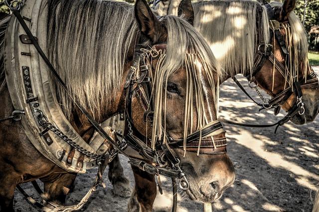 Horses, Horse's, Draft Horse, Span, Yoke, Bridle