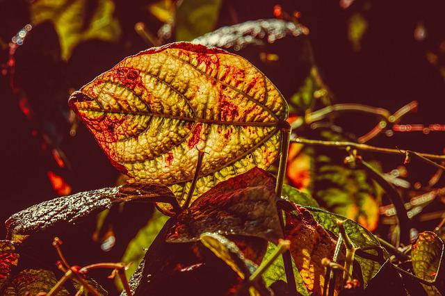 Leaf, Bush Bean, Backlighting, Leaf Vein, Bright