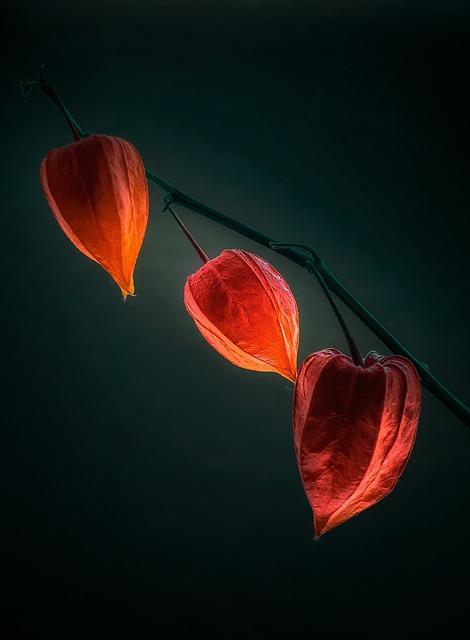 Nature, Bright, Flower, Background, Plant, Darkness