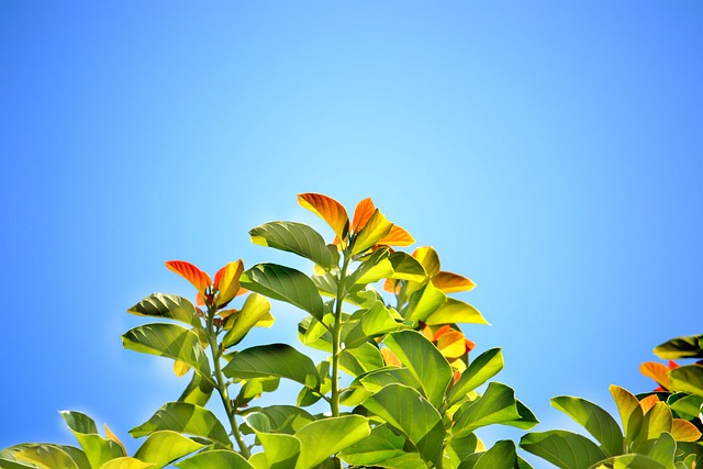 Leaves, Blue Sky, Summer, Bright Day, Sunny Day