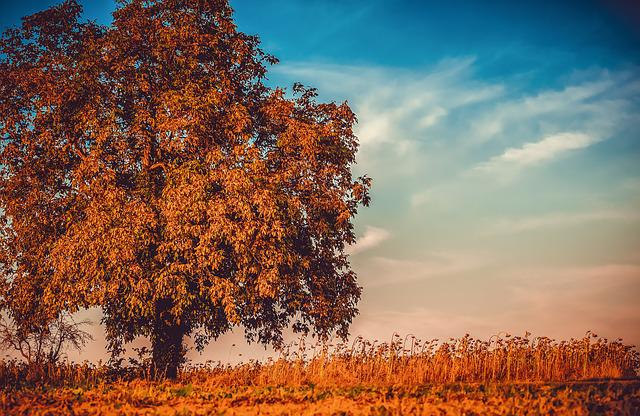 Walnut, Tree, Branches, Leaves, Fall Leaves, Bright