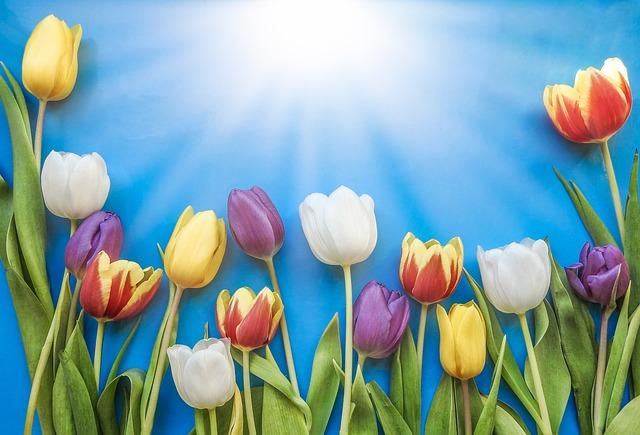 Tulip, Nature, Flower, Easter, Flora, Bright, Floral