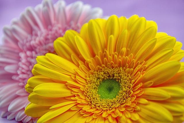 Flower, Gerbera Plant, Nature, Flowers, Bright, Pink