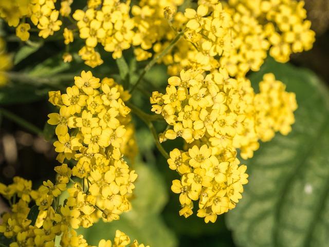 Flowers, Flower Garden, Yellow, Bright