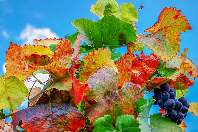 Vine Leaves, Leaves, Bright, Fall Foliage, Emerge
