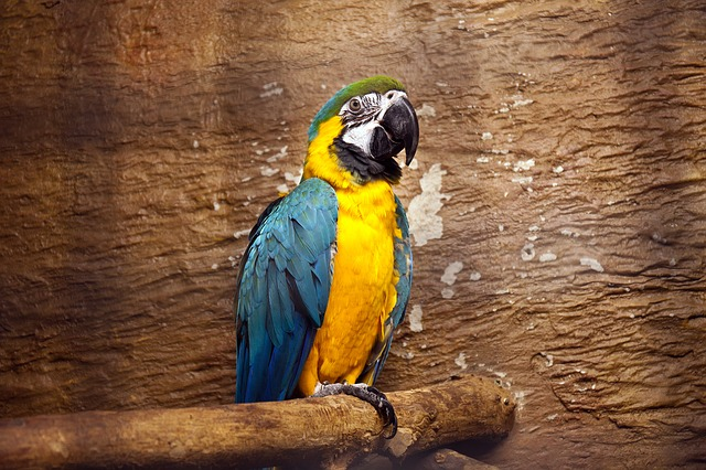 Parrot, Macaw, Bright, Tropical, Bird, Nature, Colorful