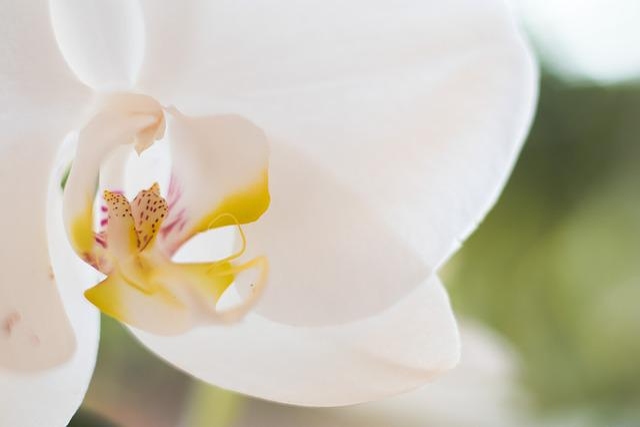 Nature, Flower, Flora, Bright, Leaf, Orchid, Plant
