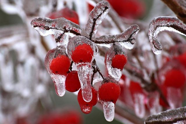 Nature, Tree, Winter, Season, Bright