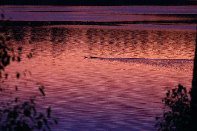 Lake, Sunset, Ducks, Landscape, British Columbia