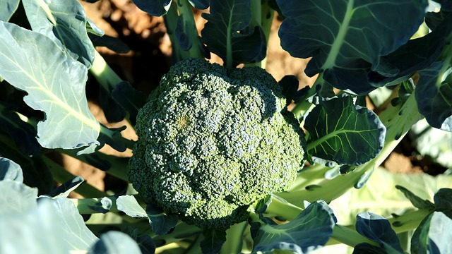 Broccoli, Cauliflower, Vegetable, Crop