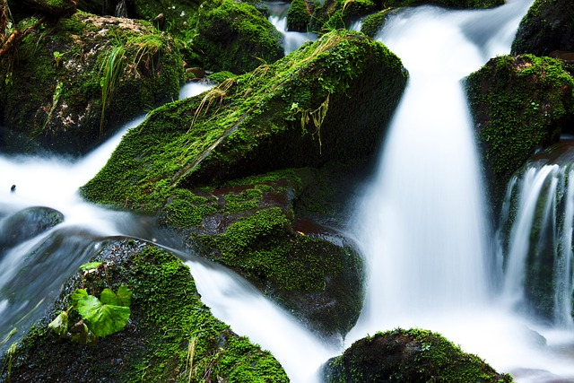 Cascade, Moss, Nature, Stream, Brook, Creek, River