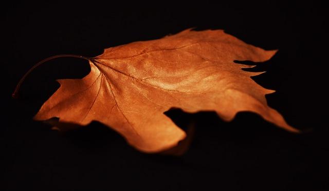 Autumn, Autumn Leaves, Brown, Black, Closeup