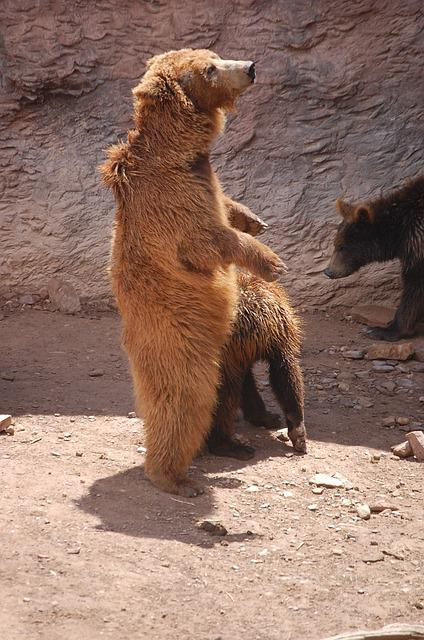 Nature, Zoo, Brown Bear, Show, Animal