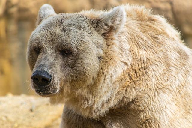 Bear, Brown Bear, Mammal, Animal, Brown, Wildlife, Fur
