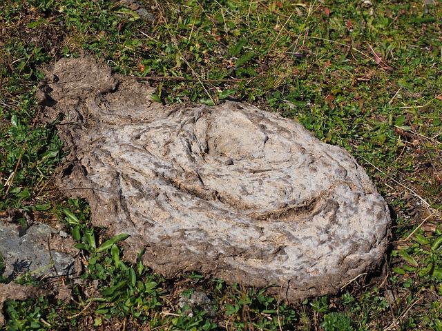 Cow Dung, Flat Bread, Dung, Crap, Brown, Grass