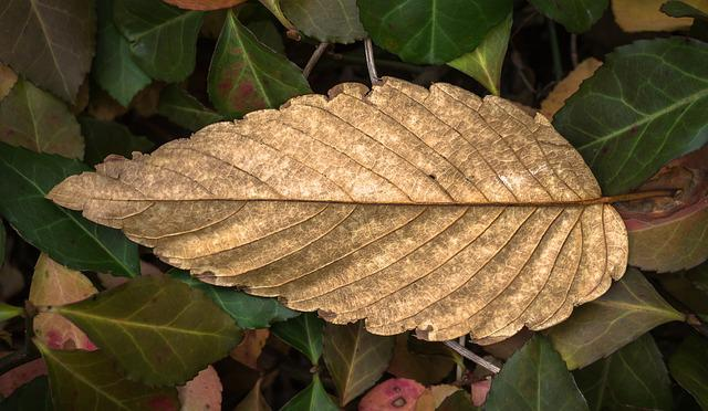 Leaves, Autumn, Plants, The Leaves, Leaf, Nature, Brown