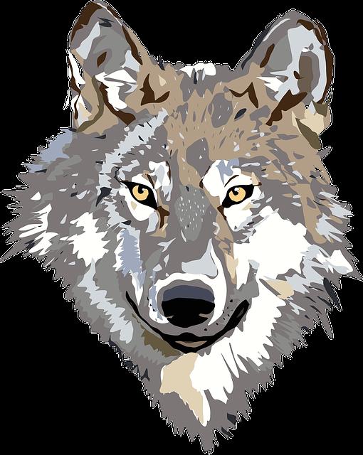 Wolf, Face, Head, Gray, Brown, Animal, Wild, Predator