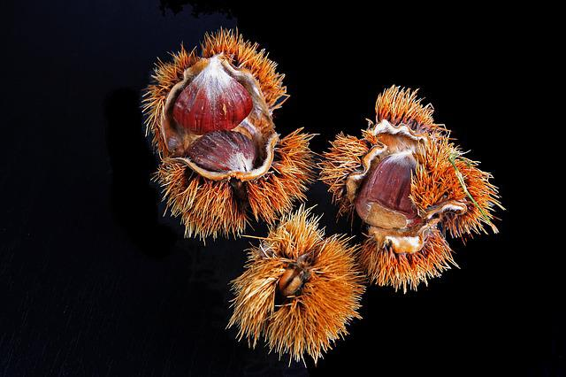 Chestnut, Spur, Housing, Brown, Prickly, Fruits, Autumn