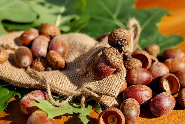 Acorns, Tree Fruit, Fruits, Brown, Shiny, Oak Leaves