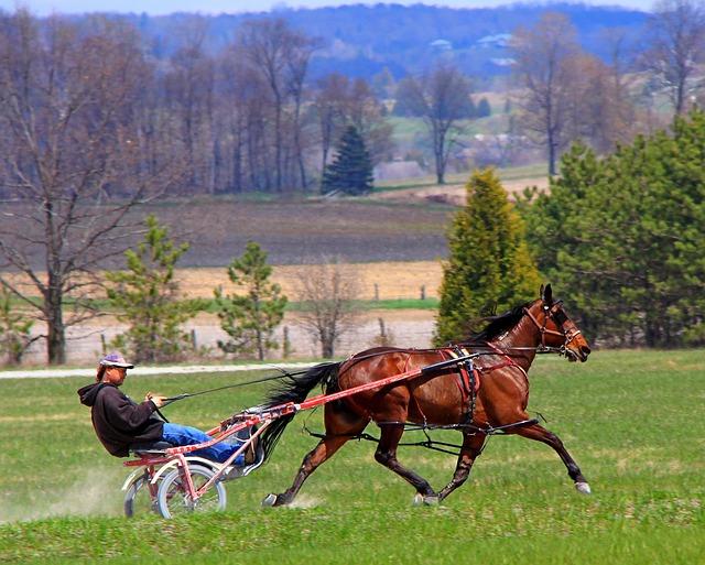 Animal, Equine, Horse, Brown, Performance, Standardbred