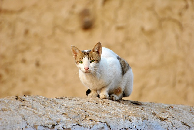 Cat, Brown, Wall, Animal, Nature, White Cat, Brown Cat