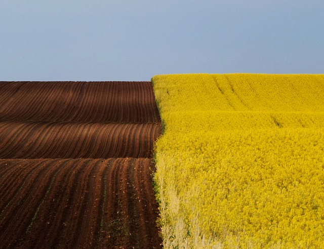Landscape, Spring, Brown - Yellow, Rape