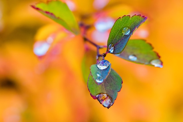 Leaves, Autumn, Brunches, Sky, Blue, Autumn Leaves