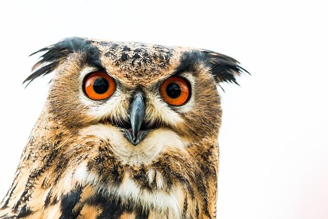 Eagle Owl, Bubo Bubo, Owl, Bird, Feather, Nature